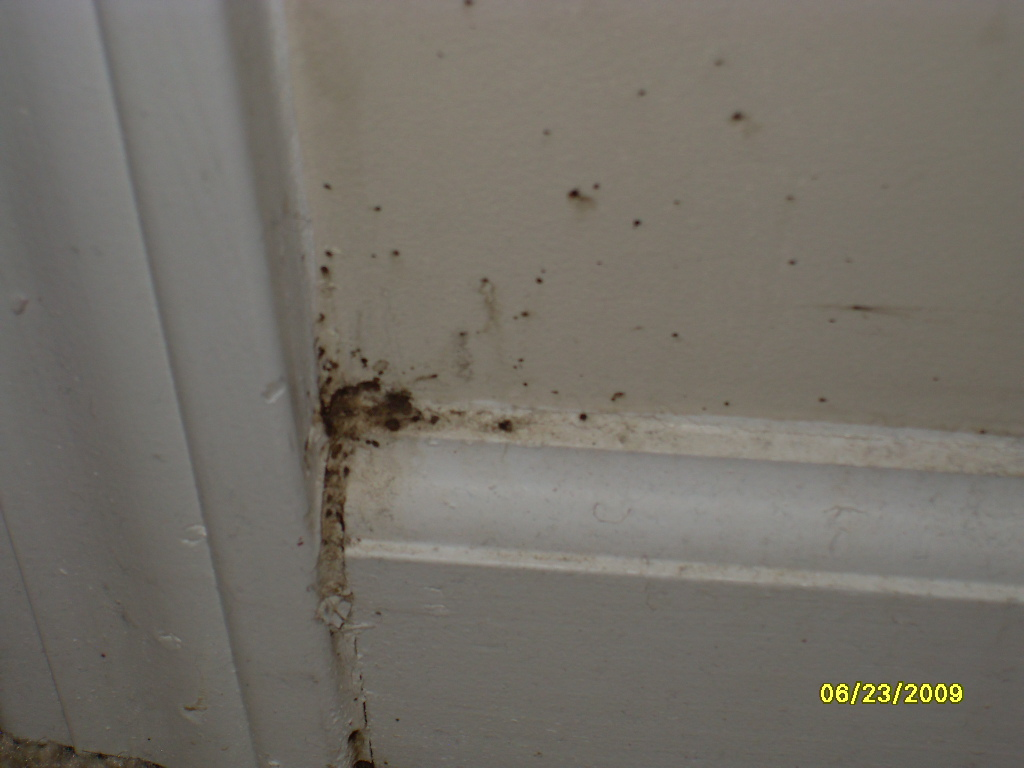 Baby Bed Bugs : Baby Bed Bugs Mattress