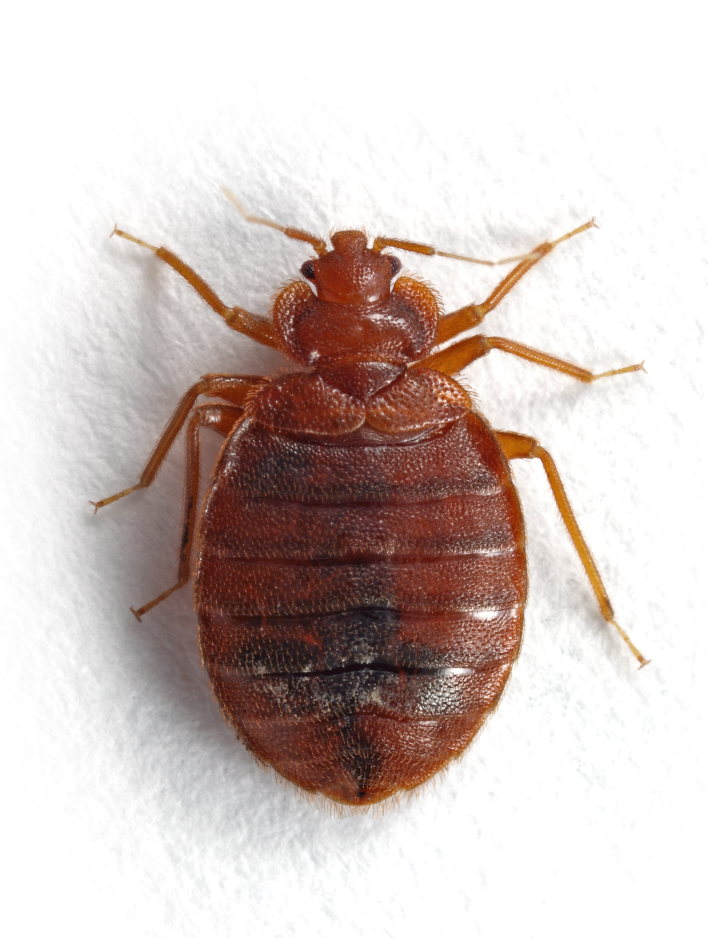 bed bugs do it yourself pest lawn control bds