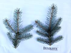 desikote_sample.jpg