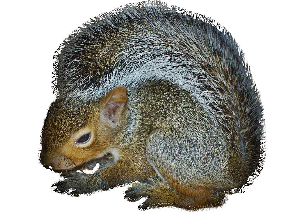 squirrel do it yourself pest lawn control