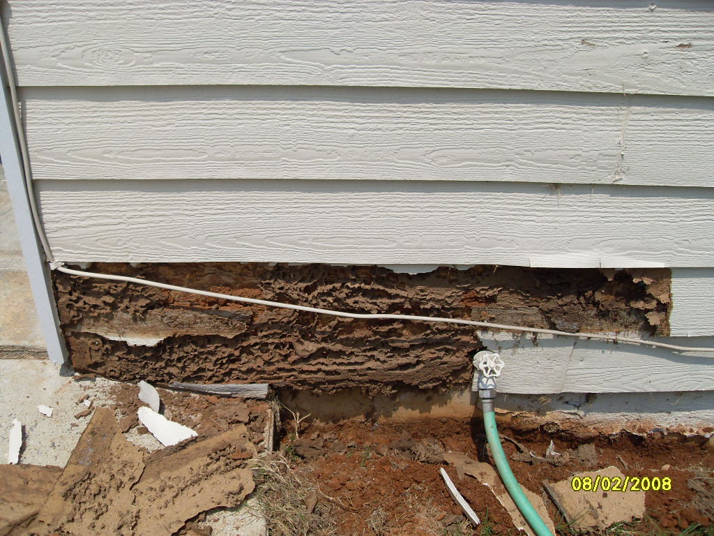 termite damage photo by do it yourself pest control pestrong